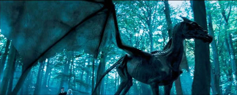 This is a thestral.